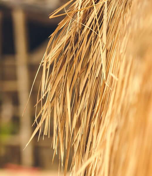 alternative-biomasses-img